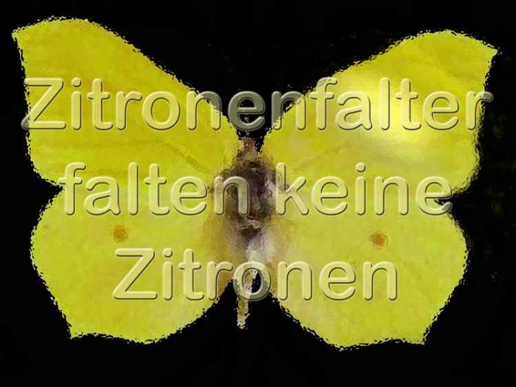 »Zitronenfalter falten keine Zitronen«, Foto + Grafik © Friedhelm Denkeler 2002