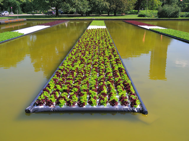"""Schwimmende Salatfelder"", Foto © Friedhelm Denkeler 2011"