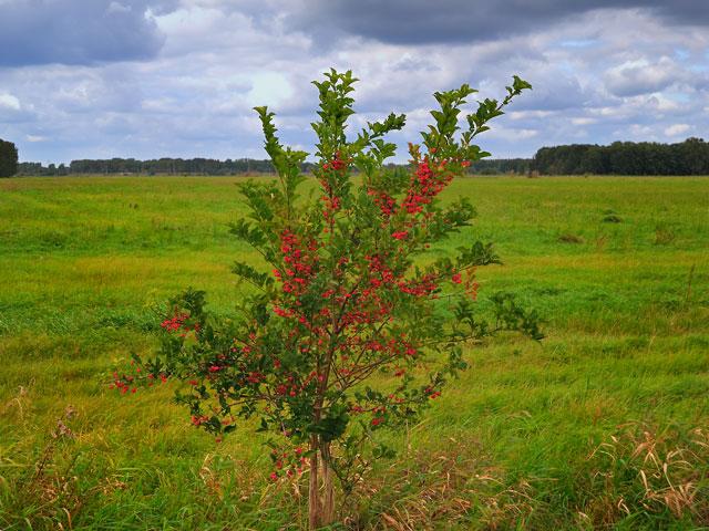 """""""Rote Beeren am Nuthegraben"""", Foto © Friedhelm Denkeler 2011"""