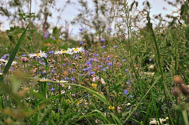 """Documenta 13: Kristina Buchs Schmetterlingsgarten"", Foto © Friedhelm Denkeler 2012"