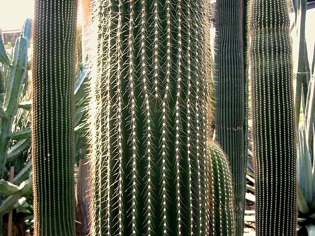 """Kakteen im Botanischen Garten"", Foto © Friedhelm Denkeler 2002"