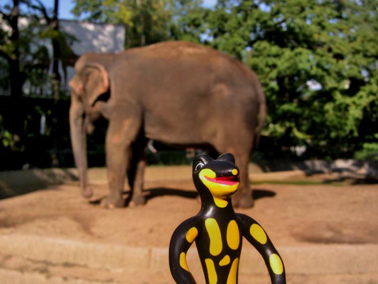 """""""Lurchi und der Elefant"""", Foto © Friedhelm Denkeler 2002"""