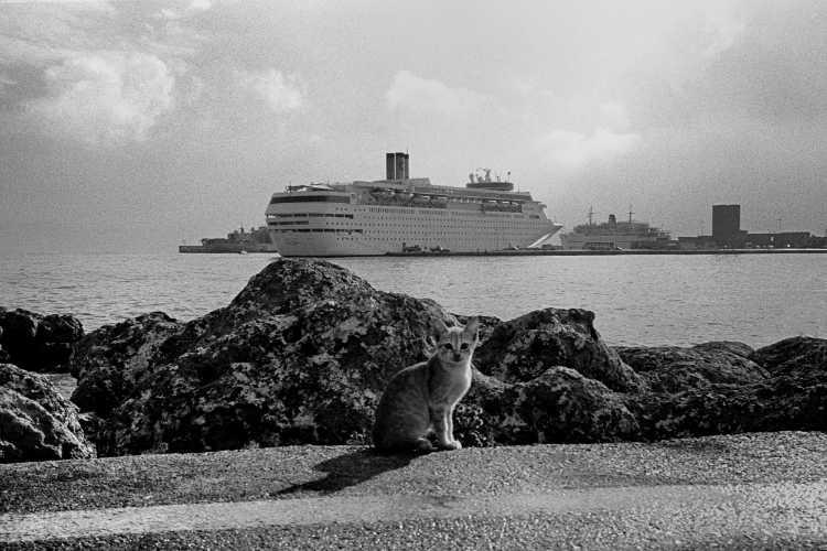 »Ich kann auch Katzenfotos« (Rhodos), Foto © Friedhelm Denkeler 1997