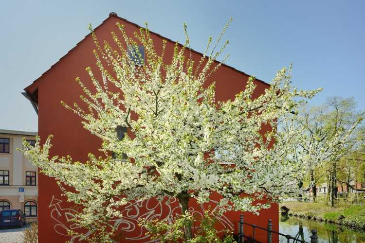 »Frühling in Cottbua 1«, Foto © Friedhelm Denkeler 2019