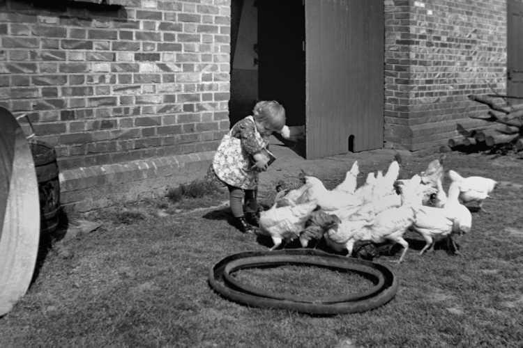 »Gisela füttert die Hühner«, 1939,  © Archiv Friedhelm Denkeler