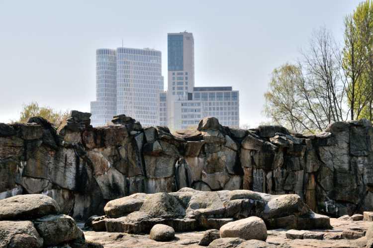 «Der Eisbär blickt auf die neuen Hochhäuser in der West-City« (Berlin), Foto © Friedhelm Denkeler 2019