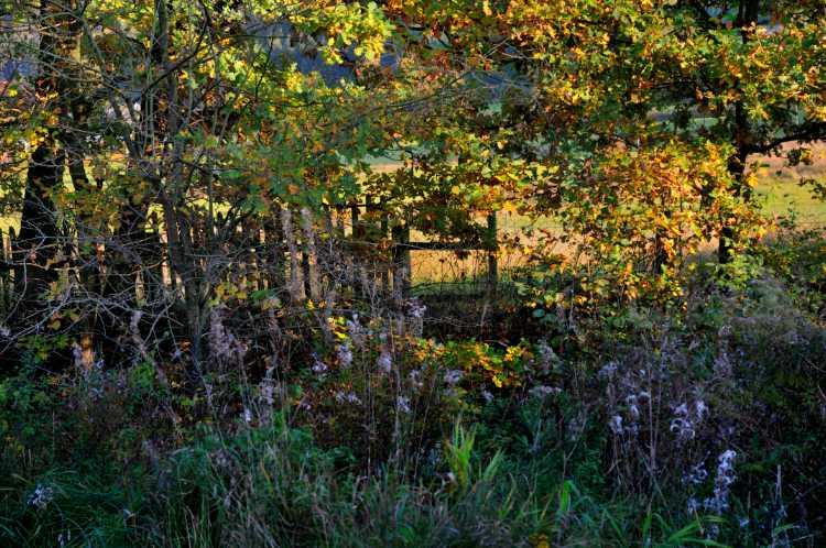 »Herbst-Wanderung an der Else von Plettenberg nach Köbbinghausen«, Foto © Friedhelm Denkeler 2008